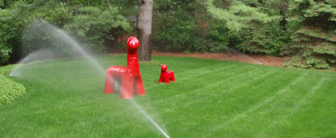 newly installed sprinklers in backyard